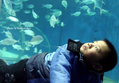壁纸 海底 海底世界 海洋馆 水族馆 454_315